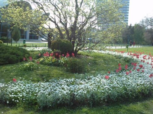 Flori in parc